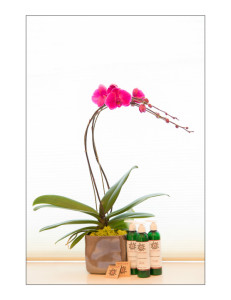 Orchid_StillLife